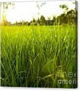 Lush Grass Canvas Print