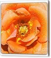 Macro Image Of A Rose Canvas Print