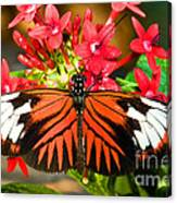 Madeira Butterfly Canvas Print