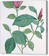 Magnolia Discolor, Engraved By Legrand Canvas Print