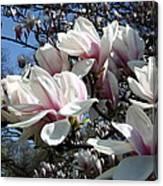 Magnolia  Twig Canvas Print