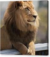 Majestic Lion Canvas Print