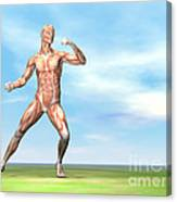 Male Musculature In Fighting Stance Canvas Print
