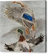 Mallard Pair Canvas Print
