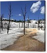 Mammoth Hot Spring Area Canvas Print