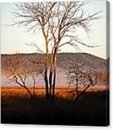 Marsh Tree Reflections Canvas Print