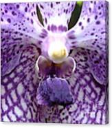 Micro Orchid Canvas Print