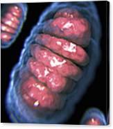 Mitochondria Canvas Print