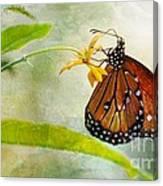 Queen Butterfly Danaus Gilippus Canvas Print