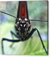 Monarch Stare Canvas Print