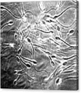 Monkey Sperm Canvas Print