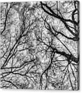 Monochrome Forest Canvas Print