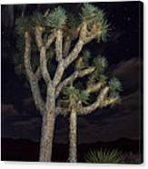 Moon Over Joshua - Joshua Tree National Park In California Canvas Print
