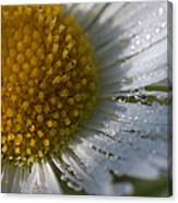 Mornings Dew Canvas Print