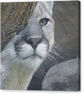 Mountain Lion Painterly Canvas Print