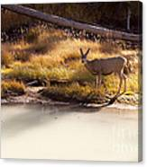 Mule Deer   #3942 Canvas Print