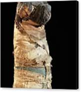 Mummified Dog From Ancient Egypt Canvas Print