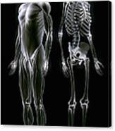 Muscles And Bones Canvas Print