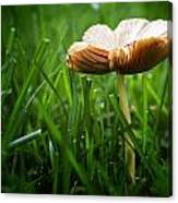 Mushroom Growing Wild On Lawn Canvas Print