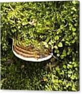 Mushroom Plate Canvas Print