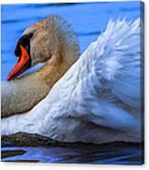 Mute Swan 2 Canvas Print