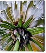 Mystical Magical Dandelion Canvas Print