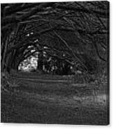 Mystical Yew Trees 1 Canvas Print