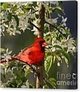 Red Cardinal In Flowers Canvas Print