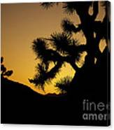 New Photographic Art Print For Sale Joshua Tree At Sunset Canvas Print