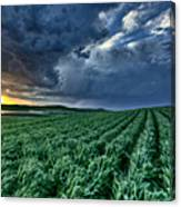 Newly Planted Crop Canvas Print