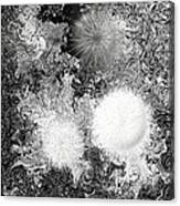 No. 801 Canvas Print