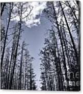 North Woods Forest Canvas Print