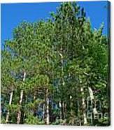 North Woods Tree Line Canvas Print