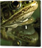 Northern Leopard Frog Canvas Print