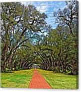 Oak Alley 3 Canvas Print