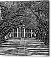 Oak Alley Bw Canvas Print