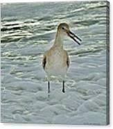 Ocean Bird Canvas Print