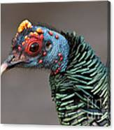 Ocellated Turkey Portrait Canvas Print