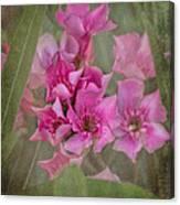 Oleander Cluster Canvas Print