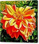 Orange Dahlia On Taquille Island In Lake Titicaca-peru  Canvas Print