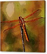 Orange Dragonfly Canvas Print