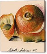 Orange..navel Canvas Print
