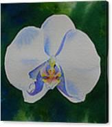 Orchid Dance 2 Canvas Print