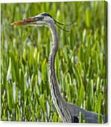 Orlando Wetlands Great Blue Heron Canvas Print