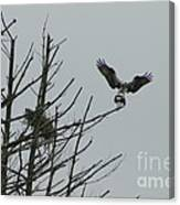 Osprey Love Canvas Print