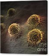 Osteoblast Cells Canvas Print