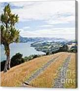 Otago Peninsula Coastal Landscape Dunedin Nz Canvas Print