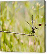 Out On A Twig Canvas Print