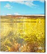 Over-under Split Shot Of Clear Water In Tidal Pool Canvas Print