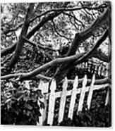 Overflowing A Picket Fence Canvas Print